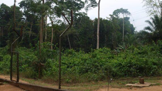 mefou-national-parkw