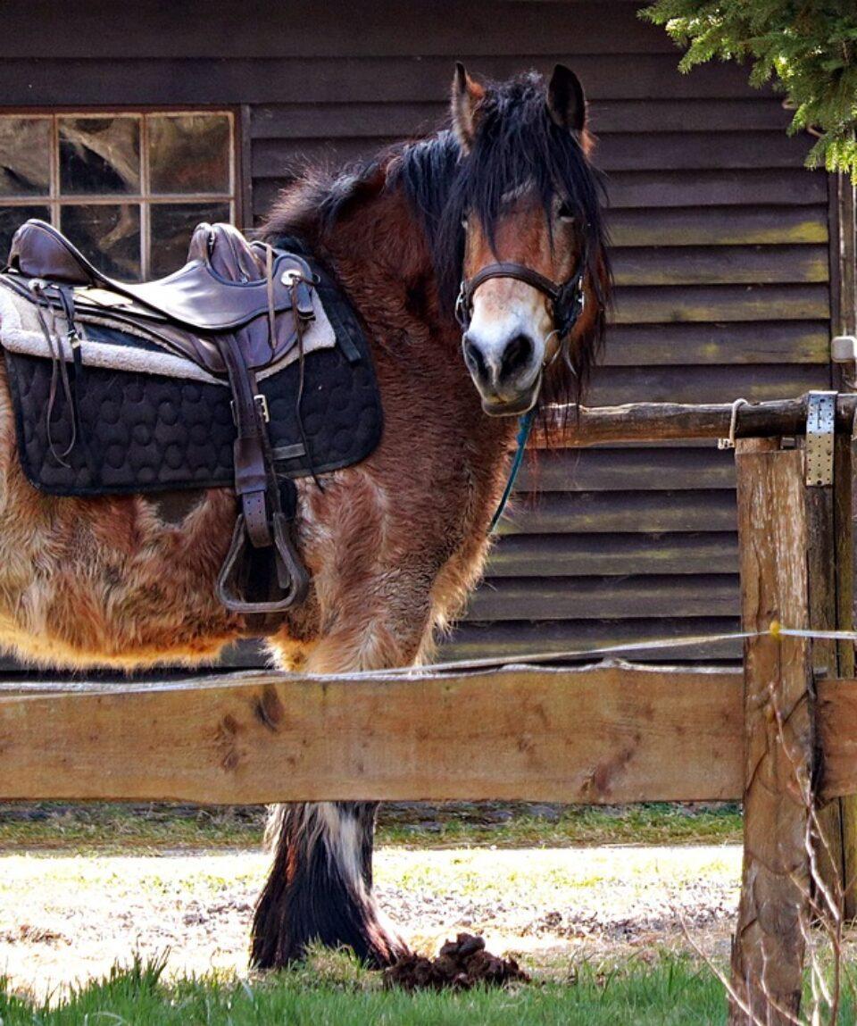 horses-2180584_1280