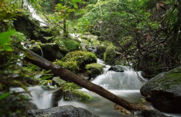 Korup National Park