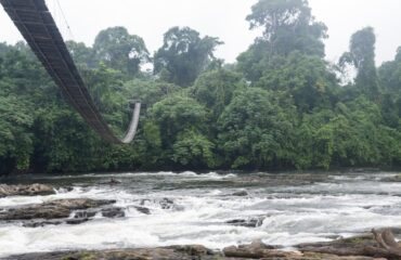 Korup National Park suspension bridge
