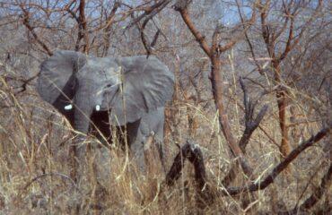 Waza-NP-Elephant