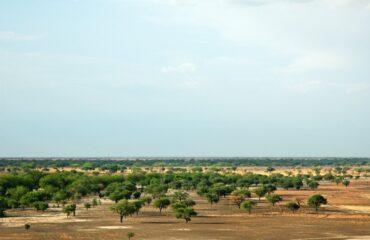 Waza National Park landscape